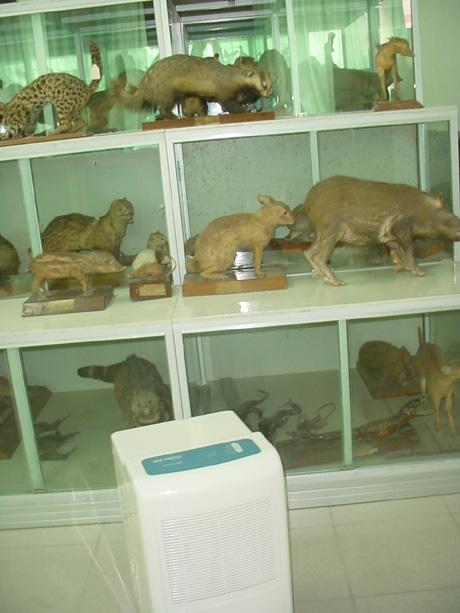 动物标本陈列柜边的除湿机