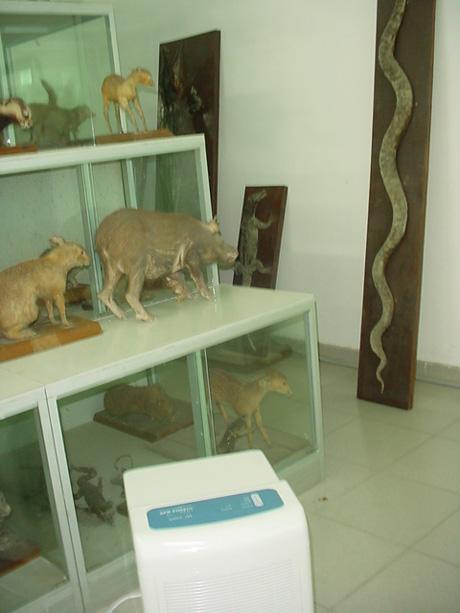 动物标本架旁的除湿机