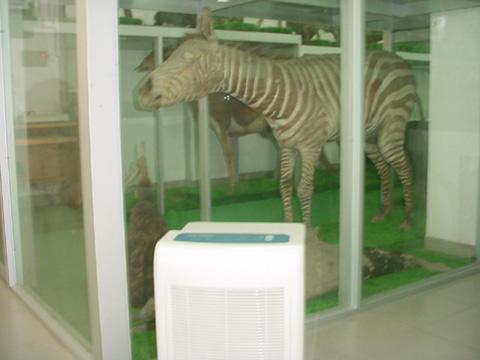 除湿机放在动物标本陈列柜边
