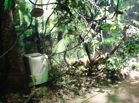 除湿机放置在热带鸟类标本区