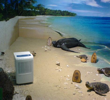 海龟标本区放置的除湿机